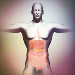 human body and digestive organs, 3D illustration