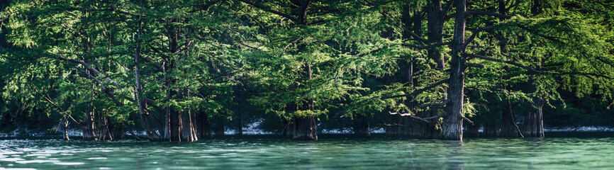 Cypresses growing in the lake