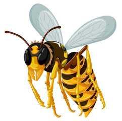 Single wasp flying on white background