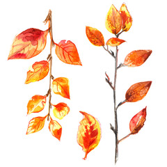 Autumn leaves painted with watercolors on white background. Coloured bright leaves hand-painted, paint, taktura, watercolor. Dry branch