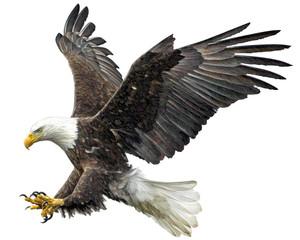 Bald eagle fly landing hand draw on white background vector illustration.