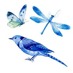 акварель,птица,бабочка,стрекоза