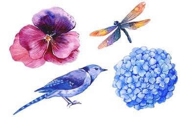 акварельный рисунок,птица,стрекоза,бабочка ,гортензия