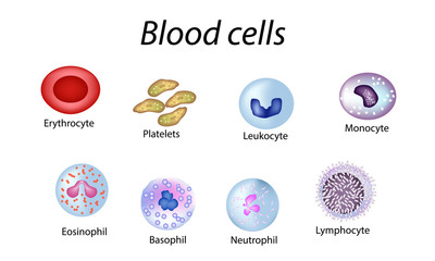 Blood cells. Set of colored cells. Red blood cells, platelets, leukocytes, lymphocytes, eosinophils, neutrophils, basophils, monocytes. Infographics. Vector illustration on isolated background
