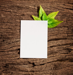 White blank paper sheet with fresh spring  green leafs border