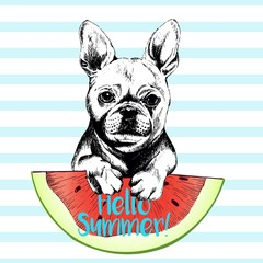 Vector hand drawn illustration of french bulldog dog eating the watermelon slice. Hello summer. Isolated on light green strips. fresh fashion vibrant summer poster.
