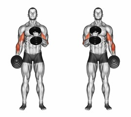 Cross body hammer curls. Exercising for bodybuilding Target muscles are marked in red. Initial and final steps. 3D illustration
