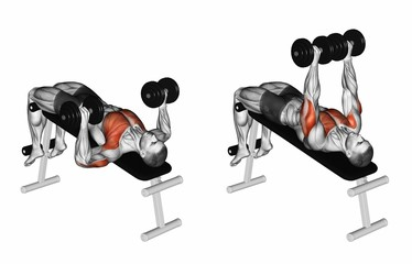 Decline Dumbbell Bench Press. Exercising for bodybuilding Target muscles are marked in red. Initial and final steps. 3D illustration