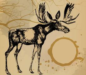 Deer, moose watercolor painting design template vector image