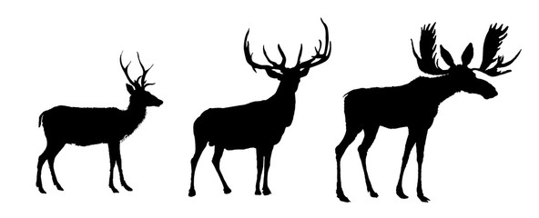 Deers and moose vector image