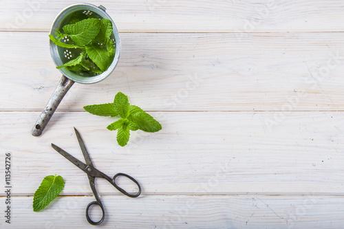 Menta fresca hierbas arom ticas para uso en la cocina - Plantas aromaticas en la cocina ...