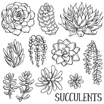Hand drawn succulent plants vector set