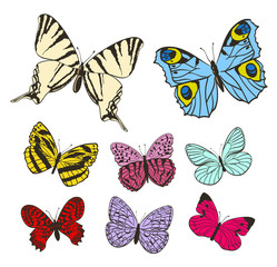 set of colorful butterflies with open wings