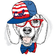 Funny dog wearing a cap and sunglasses . Vector  for a card or poster . Prints on the clothes or accessories . Cool dog .