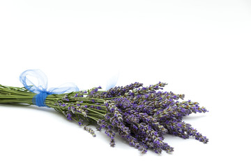 isolated lavender (fresh lavender) 