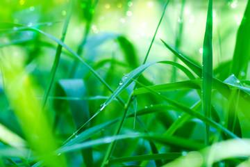 green grass and light.