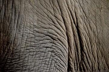 Photo sur Toile Les Textures Elefantenhaut