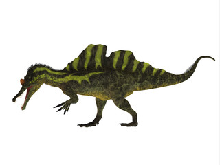 Ichthyovenator Side Profile - Ichthyovenator was a theropod spinosaur dinosaur that lived in Laos, Asia in the Cretaceous Period.