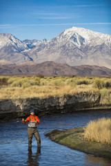 Early morning fly fishing on the Owens River, Eastern Sierra