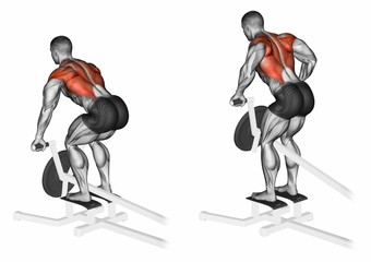 Thrust T-shaped on the back muscles in the slope. Exercising for bodybuilding Target muscles are marked in red. 3D illustration