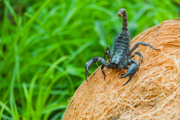 Closeup view of a scorpion in nature background