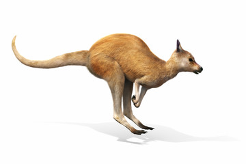 Kangaroo jumping on a white background. 3d rendering