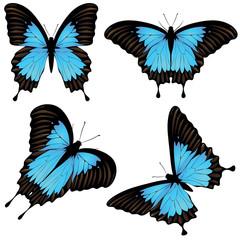 Mountain Swallowtail Set