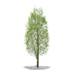 Tree in high definition isolated on a white background