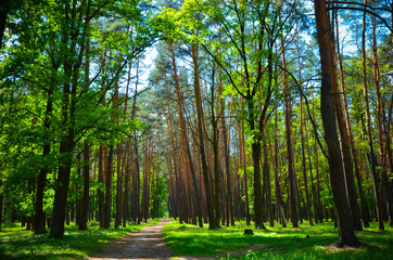 beautiful green forest wth trees and grass
