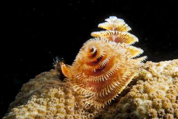 Unterwasser - Riff - Wurm - Röhrenwurm - Tauchen - Curacao - Karibik