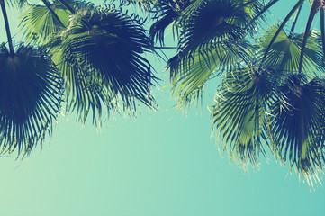 Summer background with Palm tree against sky. Sea tour. Wall mural