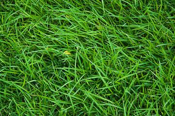 the beautiful green grass