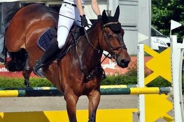 Das Pferd im Sprung über eine Hürde, Detail