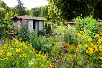 Allotment flower garden