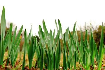 伸び行く草葉
