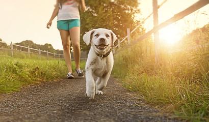 Spaziergang einer jungen Frau mit Hund bei Sonnenuntergang neben einer Pferdekoppel