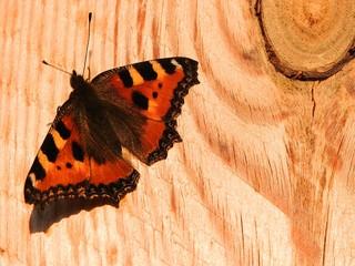 Бабочка на доске