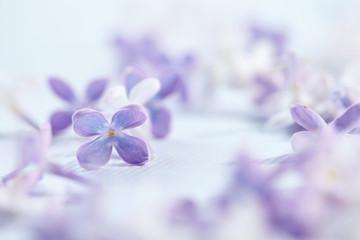 nice lilac