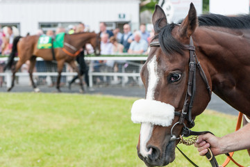 Walking a race horse through the parade ring