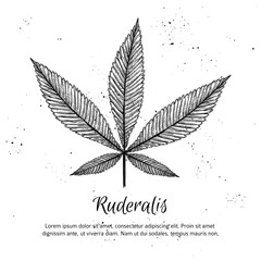 Hand drawn vintage vector illustration - Medical cannabis. Sketc