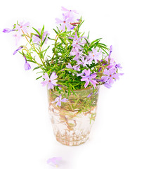 Bouquet of small lilac flowers on a white background