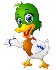 Cute baby duck presenting
