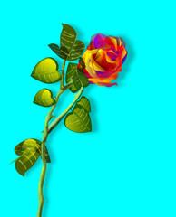 Rosa, illustrazione floreale, fondo azzurro.