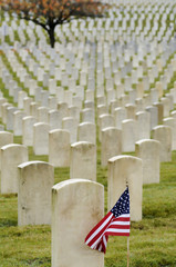 American flag planted in veteran cemetery