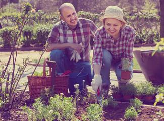Elderly positive couple engaged in gardening