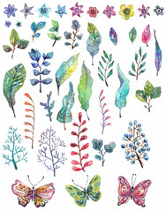 Watercolor floral collection, flowers, leaves and butterflies