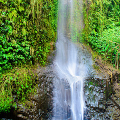 Tropical waterfall cascading down a rock shelf and surrounded by lush green plant life.