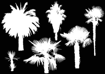 six white palm trees isolated on black