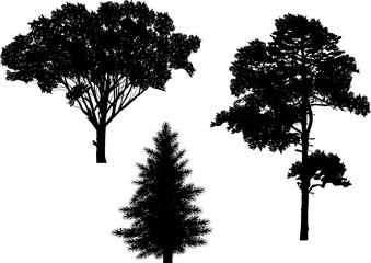 isolated three black trees silhouettes