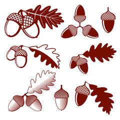 Wall Mural - Oak acorns and leaves vector set